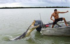 Crocodile attacks Israeli backpacker in Australia