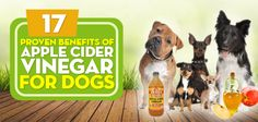 acv benefits for dogs