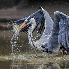 Великолепные фотографии птиц Джонсон Чуа « FotoRelax