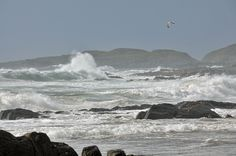 Waves, rocks and a gull in Saligo Bay, Isle of Islay