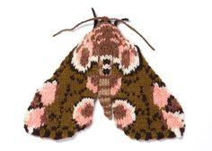 Knitted Peach Blossom Moth (Thyatira batis) Max Alexander