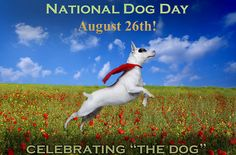 NATIONAL DOG DAY (October 26) serves to help galvanize the public to recognize the number of dogs that need to be rescued each year, and acknowledges family dogs and dogs that work selflessly each day to save lives, keep us safe and bring comfort.