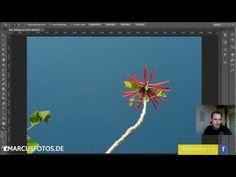 PHOTOSHOP QUICKTIPP: Objekte aus dem Hintergrund entfernen - marcusfotos.de
