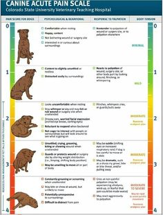 Dog pain scale - will use I'm a dog lover