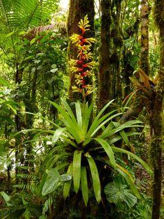 Orchid Plants, Exotic Plants, Air Plants, Tropical Garden, Tropical Flowers, Tropical Plants, Paludarium, Vivarium, Forest Mural