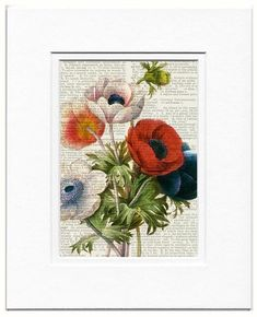 vintage anemone artwork printed on old page from by FauxKiss