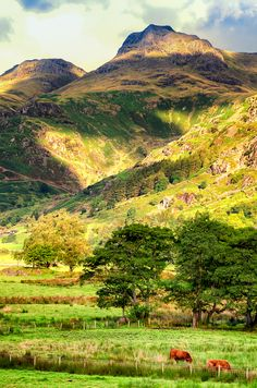"""""""Foot of the Langdales"""" Lake District, by Rory McDonald"""