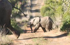Elephant Crossing, Kwandwe Game Reserve