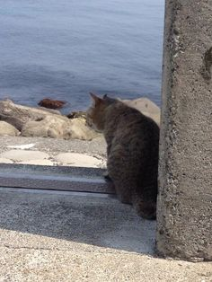 猫も海を眺めます。