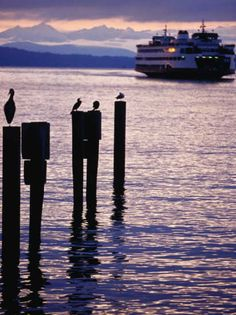 Wa State Ferry Coming in to Dock, Seattle, Washington, USA Transportation Photographic Print - 46 x 61 cm Vashon Island, Whidbey Island, Bainbridge Island, Western Washington, Seattle Washington, Washington State, Sequim Washington, Forks Washington, Wa State