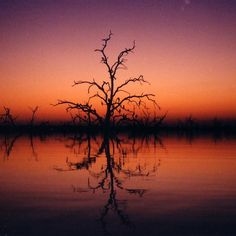 "View from a canoe at dusk in the ""drowned forest"" of Lake Kariba in Zimbabwe's Matusadona National Park.  The peaceful vista helps you momentarily forget the hippo and croc activity in these still waters.  The emotional mix of danger and awe leaves an indelible memory. #SundaySerenity #adventure #travel Fine tune your #Africa #safari"