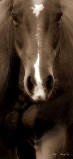 """""""When god created the horse, he said to the magnificent creature: I have made thee as no other. All the treasures of the earth lie between thy eyes. Thy shalt carry my friends upon thy back. Thy saddle shall be the seat of prayers to me. And thou shalt fly without wings, and conquer without sword."""" -Anonymous"""