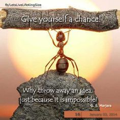 Give yourself a chance to succeed than surrender to fear.