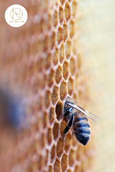 Can I eat honeycomb? Honey Pictures, Honey Images, Fungi, Australian Honey, Best Honey, Can I Eat, Honey Brown, Raw Honey, Ceramic Jars