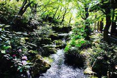 #日本 #japan #島根 #由志園 #旅 #travel #japangarden #beatiful #canon #eos5 #カメラ好きな人と繋がりたい #写真好きな人と繋がりたい