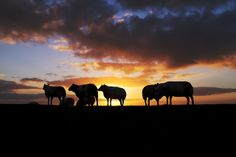 Sheep on the levee | Flickr - Fotosharing!