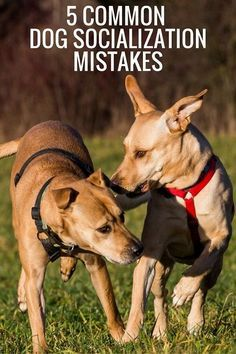 5 common dog socialization mistakes