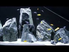 We realeased fishes after 28 days from the aquarium setup (relevant video can find on this channel). They are mbuna cichlid kind only. Fish Aquarium Decorations, Aquarium Setup, Aquarium Design, Aquarium Ideas, Cichlid Aquarium, Aquarium Fish Tank, Turtle Tank Setup, Paludarium, African Cichlids