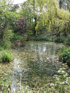 Old and forgotten victorian pond.