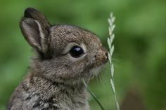Edge Of The Plank: Cute Animals: Baby Rabbits II