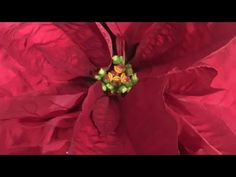 Silly 12 Days Of Christmas Remix- MY BEST FRIEND GAVE TO ME (5 Walmart bags!!) - YouTube My Best Friend, Best Friends, 12 Days Of Christmas, I Am Awesome, Walmart, Youtube, Bags, Painting, Beat Friends