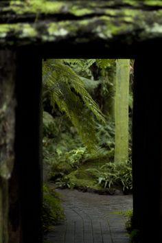 fern gardens, whangarei - All For Garden Ferns Garden, Shade Garden, Garden Art, Japanese Maple Garden, Japanese Gardens, State Parks, My Secret Garden, Secret Gardens, Moss Plant