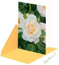 Diese Rosenkarte ist ohne Text und eignet sich hervorragend als Geburtstagskarte, Dankeskarte, .. Flowers, Plants, Thanks Card, Random Stuff, Florals, Planters, Flower, Blossoms, Plant