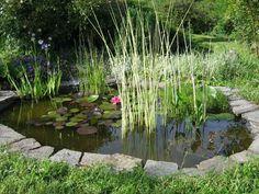 Passion Bassin - Les exemples de réalisation de bassins, jardins aquatiques