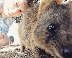 Would love to be back on Rottnest Island cycling round and taking Quokka selfies rather than taking on the list of jobs I have on my day off #Rottnest #RottnestIsland #Perth #WA #WesternAustralia #Australia #Holiday #Travel #Quokka #QuokkaSelfie #Eyes #Selfie #Outdoors #iPhoneOnly #Crema by frazerwilson http://ift.tt/1L5GqLp
