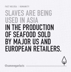 Slaves are being used in Asia in the production of seafood sold by major US and European retailers. #slavery #govegan #vegan #fish #prawns #fishing