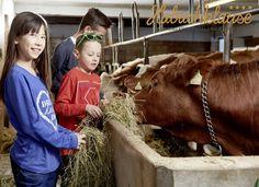 Urlaub am Bauernhof mit dem Luxus eines 4-Stern-Hotels mit täglich Baby- und Kinderbetreuung, Hallenbad, Kinderplanschbecken mit 3 kleinen Rutschen, Saunen, Massage & Beauty Massage, Cow, Hotels, Baby, Animals, Pony Rides, Petting Zoo, Child Care, Luxury