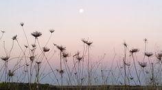 שמש, ירח וגזר קיפח - כותבת לברוח / בורחת לכתוב - תפוז בלוגים