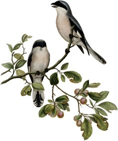 Gorgeous Antique Birds on Branch Image! - The Graphics Fairy