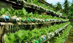 ide inspiratif taman unik tanaman sayuran