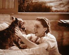 "1939 ~ There's No Place Like Home ~ Judy Garland & Toto in a Still from the Film ""The Wizard of Oz"" . Judy Garland was an American Singer, Actress & Vaudevillian . Toto's real name was Terry, a Female Brindle Cairn Terrier . Toto Wizard Of Oz, Wizard Of Oz Movie, Wizard Of Oz 1939, I Movie, Wizard Of Oz Characters, Female Characters, Movie Stars, Dorothy Gale, Land Of Oz"