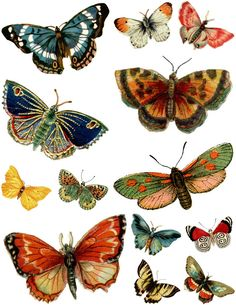 Magic Moonlight Free Images: Butterflys!