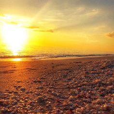 Seashells + sunset = Sanibel life #seashells #sunset #beachgirl #islandgirl #sunsetporn #beachy #saltwater #staysaltyflorida #swfl #staysalty #islandgirl #islandlife #sanibelstar #pineisland #ftmyers #sanibelisland #captivaisland #bocagrande #marcoisland #naples #ftmyers #pineisland #sanibel #captiva #mermaidlife #saltwater #lovesanibel #lovefl