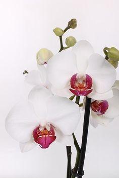 Orchid Fertilizer, Bonsai, Wedding Designs, Beautiful Flowers, Floral Wreath, Wreaths, Texture, Eye, Plants