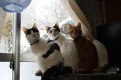 cybergata:  Shironeko and his best friends