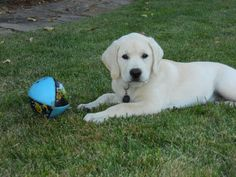 Milo puppy football