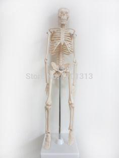 45 cm di Alta qualità modello di scheletro umano decorazione Speciale Famiglia personalizzati decorativi Figurine scheletro umano