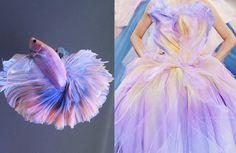 stopdropandvogue:  A pastel betta fish x Christian Dior Haute Couture Fall/Winter 2010