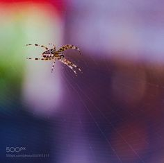 Spider in its web in front of our home. by 7j7s7
