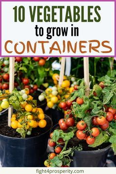 10 Easy Vegetables To Grow In Containers