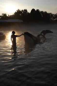 Sunset on an Orca Orcas, Animals Beautiful, Cute Animals, Ocean Creatures, Killer Whales, Sea World, Ocean Life, Marine Life, Under The Sea