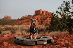 Spruce is a portable bed that doubles as a carry on for pooch essentials- ideal when you're traveling! Portable Bed, Dog Beds For Small Dogs, Pet Gear, Dog Travel, Medium Dogs, Dog Leash, Four Legged, Best Dogs, Cute Cats