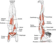 yoga for shoulders - Google Search