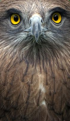 Intense Eagle | by Yair Leibovich on FineArtAmeric
