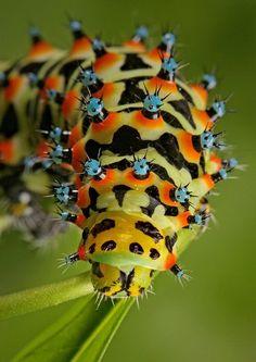 ¡Buenos días de jueves! Hasta las orugas tienen colores bonitos :) La naturaleza no deja de sorprendernos