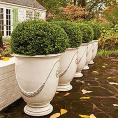 For easy elegance, plant boxwoods in stately urns. Potted Boxwood Welcome - Landscaping with Boxwoods - Southern Living